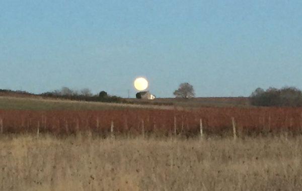 Taille au lever de lune